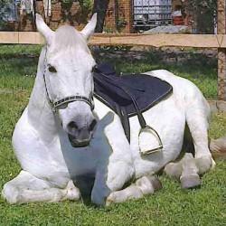 Koně u Jirásků
