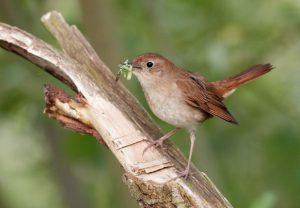 Ornitologická procházka s Vítem Zavadilem @ Uhelný Mlýn